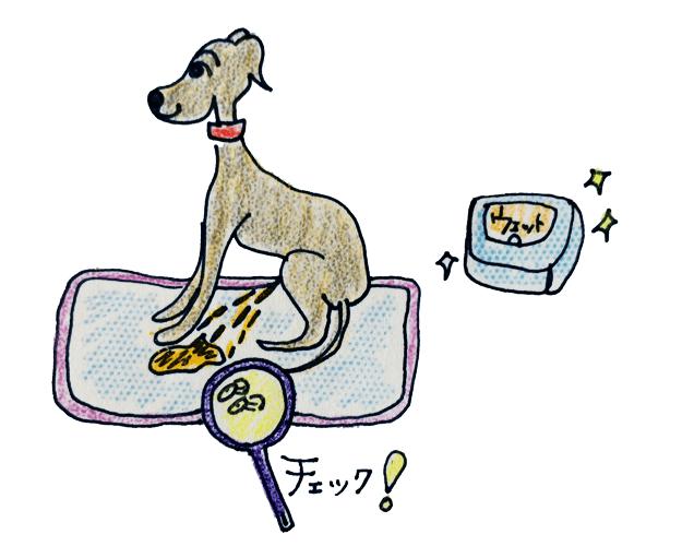 犬の排泄について|オシッコ【犬の育て方 vol.60】