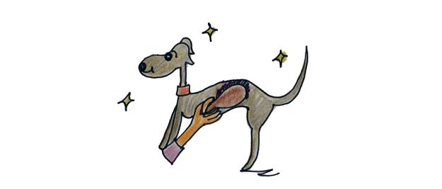 犬のグルーミング|グルーミングとは【犬の育て方 vol.51】