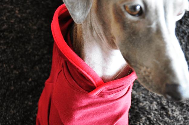 イタグレ用「半袖ストレッチTシャツ+フード付き」を作ってみた!