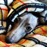 犬用寝袋「ARATA HOUSE寝袋への想い〜誕生秘話〜使い方」