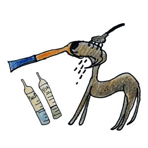 犬のグルーミング|シャンプー・お風呂【犬の育て方 vol.51】