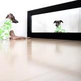 「追加販売」イタグレ・ウィペット犬服|スポーツニット|フレッシュグリーンハイビスカス