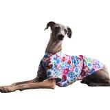 「モテる犬は花を着る」イタグレ犬服の話です。