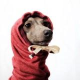 10月の犬服「イチ押しのお洋服30選」