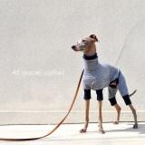 犬服|All seasons clothes|ボーダーニット|選べる4タイプ×3カラー(ベージュ/グレイ/ネイビー)