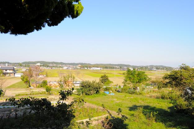 イタホイ祭りに「焼き芋」を食いに行く。in 三重県四日市「ドッグランBowwow Hills」