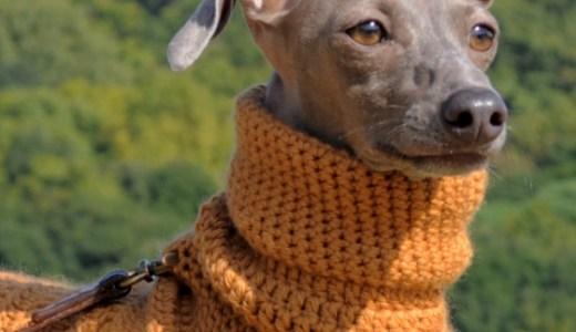 母の手でウール100%の毛糸を編んだ手作りのPoncho。寒い冬にほっかほっかイタグレBuono!ポンチョで笑顔になる。