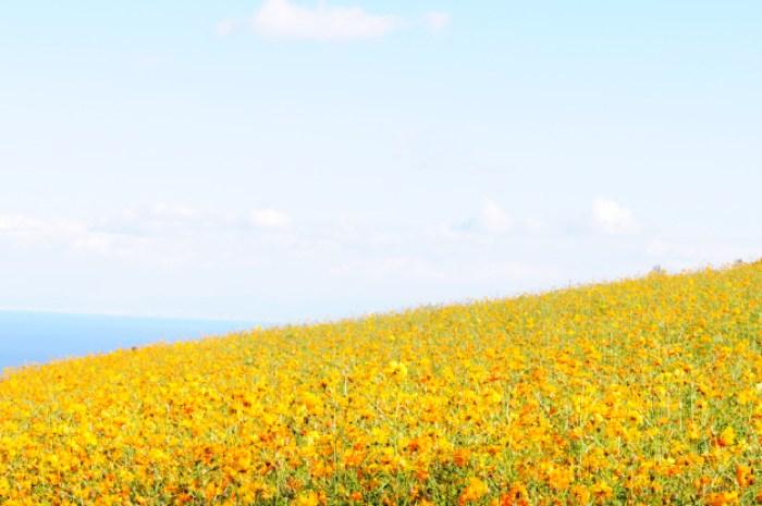 「淡路島スポット」イタグレと行くお花畑|あわじ花さじき