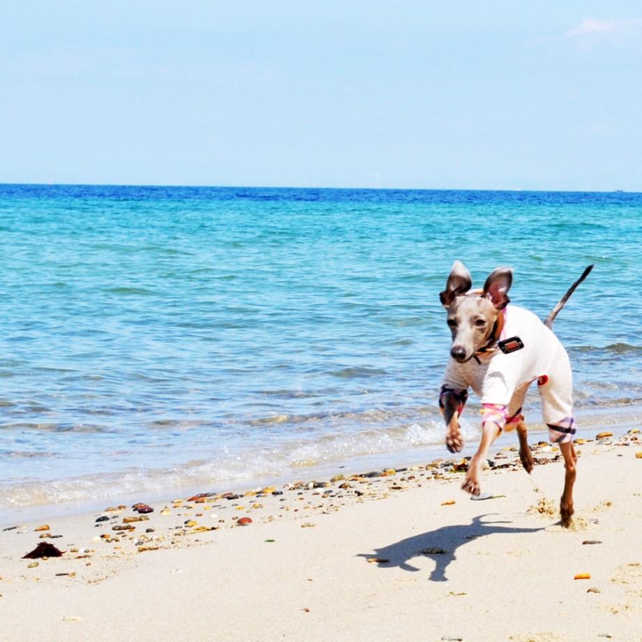 「淡路島」で、小さな小さな「ビーチ」を見つけた話。ここならイタグレBuono!も自由に走れるね。