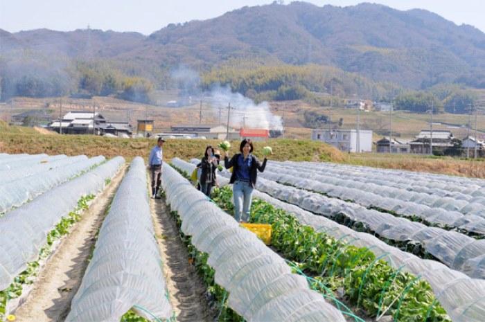 淡路島レタスの収穫体験:レタパックって何だ?新鮮サラダを食べる【木田ファーム】