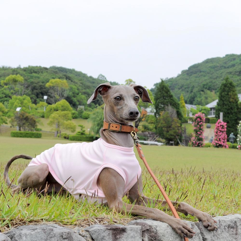 シンプルだからこそ、感じる。「犬服」スポーツニット/抗菌防臭/吸湿速乾/UVカットのお洋服