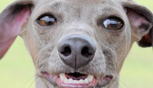 愛犬のご飯で悩んでることありますか?⑤少食と過食 痩せと太め