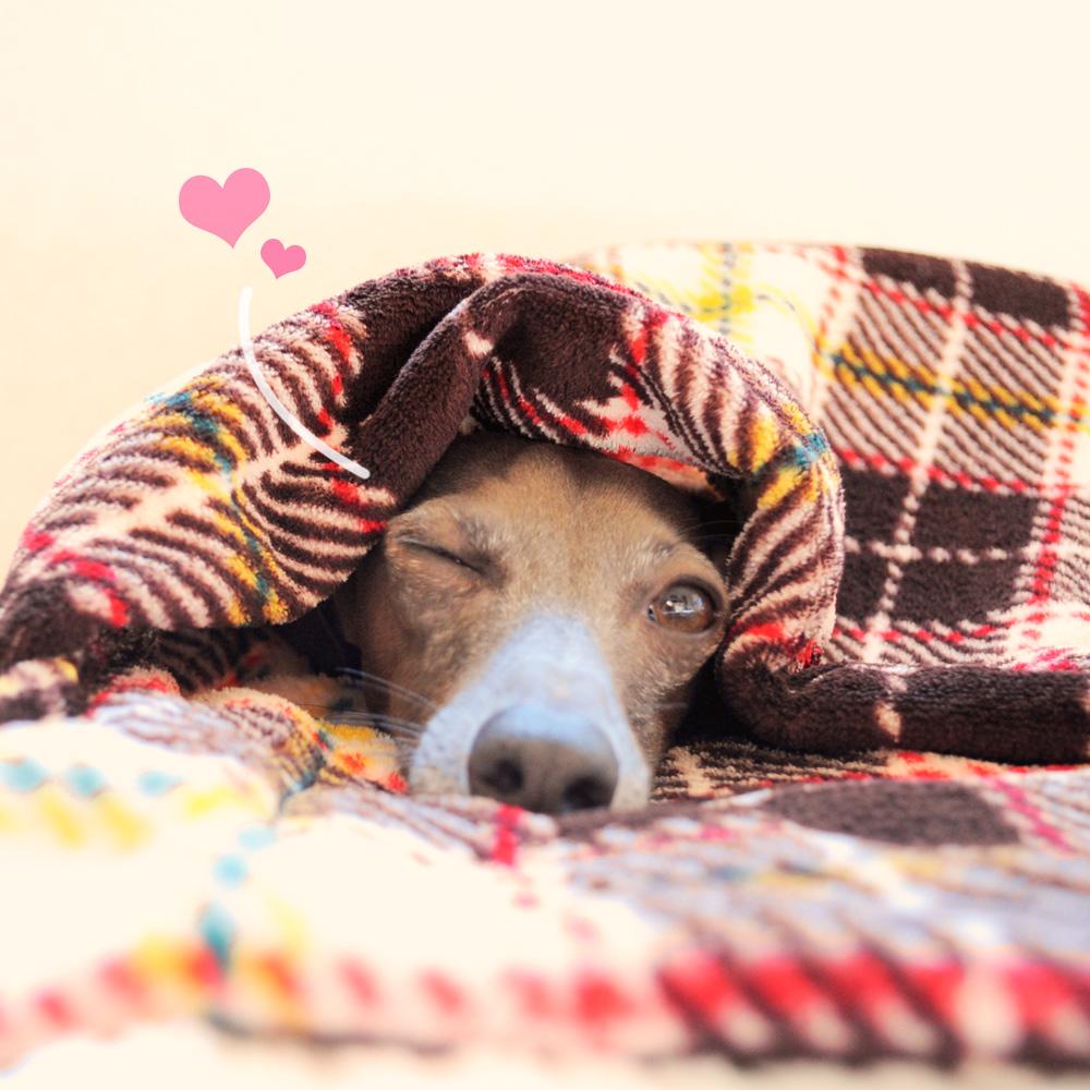 寒い冬にぴったり!「完璧すぎない犬寝袋」を一つ一つ丁寧に思いを込めて製作しています