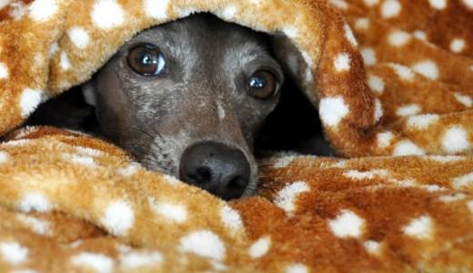 バリケンネルと寝袋を使った犬の寝床:保温・保湿効果抜群で冬も快適