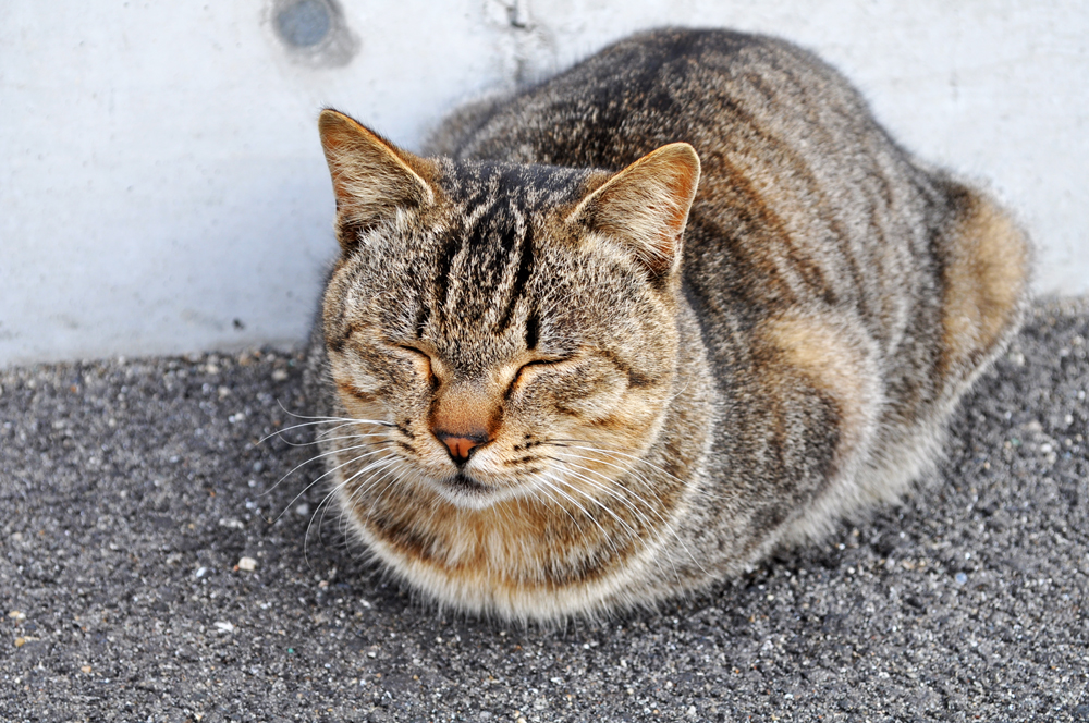 「淡路島散歩」小さなお花と昼寝する猫とかっこいいイタグレ・・・それぞれの春先