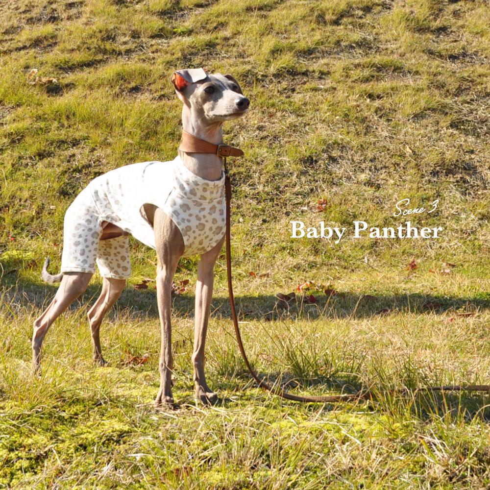 「新作犬服」Baby Panther(豹柄) 春先のちょっと寒い時、芝で遊ぶ時にちょうどいいお洋服 オフショットも公開中