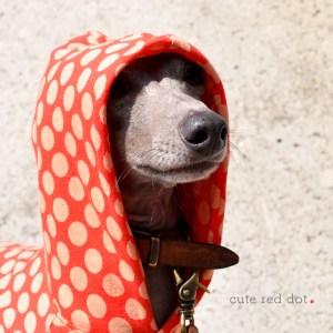 犬服|キュートな赤色ドット|天竺ニット|選べる4タイプ