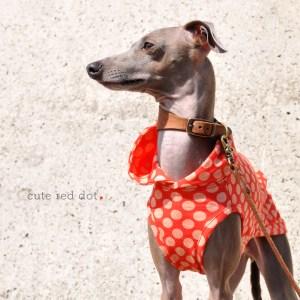 「新作犬服」キュートな赤色ドットを着て春の神戸ハーバーランドへ行こう!「イタグレ服&ミニピン服」