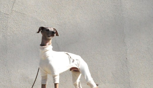 11月の犬服
