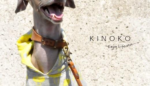 椎茸は苦手だけど「KINOKO」のお洋服を作りました♪|犬服|KINOKO|ジャガードニット
