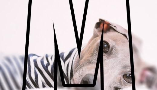 限定公開:イタグレBuono!は「癲癇(てんかん)」なの?愛犬が病気、怪我をした時に心がけているたった1つの大切なこと【ARATA HOUSEメルマガ Vol.85】2016/9/23発行