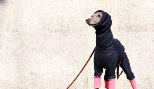 1月の犬服:1月と2月が1年で一番寒い季節です。暖かな犬服20選