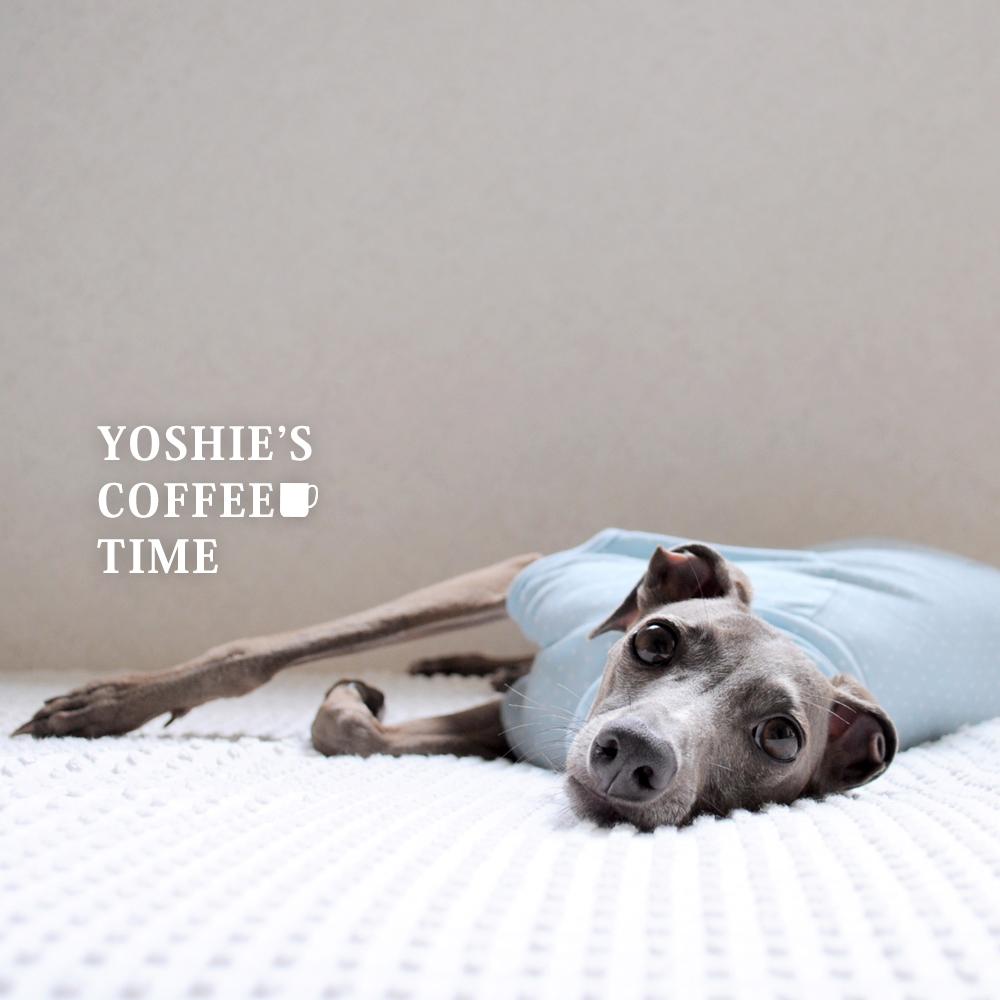 YOSHIE'S COFFEE TIME -「愛犬がお腹を壊したかなぁ、と思った時の対処法」やばいよ〜!Buono!めっちゃお腹の音が鳴り続けてる