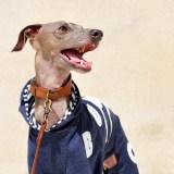 「愛犬家必見!寒いの犬との暮らしのヒント満載」10月11月によく読まれている記事ベスト5