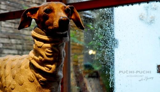 2月の犬服:2月は最低気温が0℃近くまで下がります。暖かな犬服20選