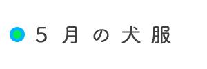 5月の犬服「イタグレ/ミニピン/ウィペット/サルーキーなど」