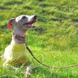 年齢と共に変化する愛犬。だから無理のない生活を心がけようと、改めて感じた。