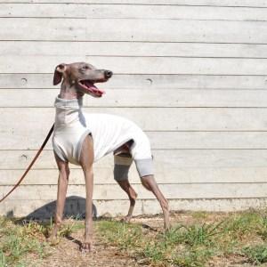 イタグレ服 ミニピン服 犬服 やさしく、やわらかなカラーネップ 選べる4タイプ