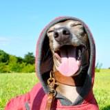 元気いっぱい遊ぶ君が好きだ!「新作犬服|トレーナー|スポーツタイプ|選べる4タイプ×3カラー」