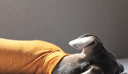 「新作犬服」愛犬と歩む、日本の四季|日本製ウール100%天竺ニット