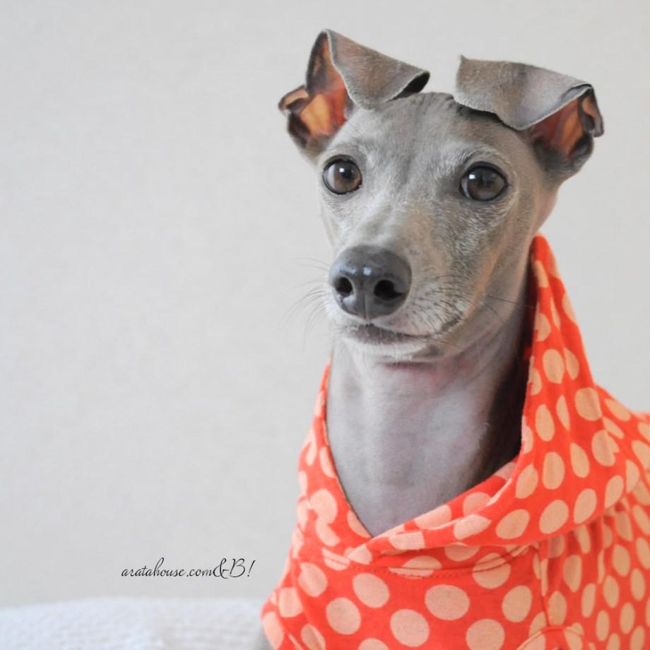 「一緒に愛犬にとってより良い服を作りましょう!」次の購入者に役立つレビューには最大1,500ポイント付与されます。