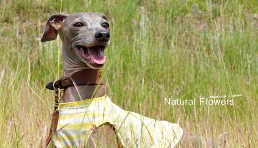 「少し大き目をサラッと、フワッと着る」2018.夏の新作 Natural Flowers|綿100%ボーダーガーゼ 新登場