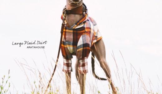10月の犬服:季節は本格的な秋へ。季節の変わり目にオススメの20選