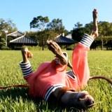 【動画】淡路島のフカフカの芝で楽しそうにゴロゴロ遊ぶ