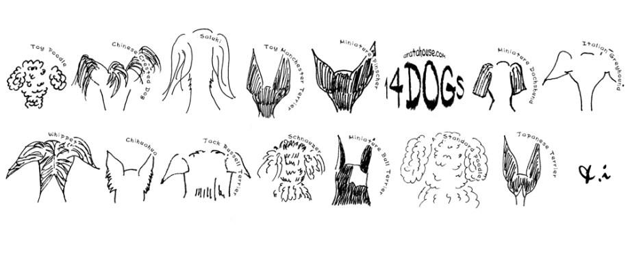 犬種別お洋服サイズ表:お洋服のサイズと着心地の決め方を解説