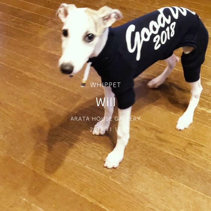 犬服作りの幸せな瞬間:ウイペットパピーのリアルな可愛さを感じる