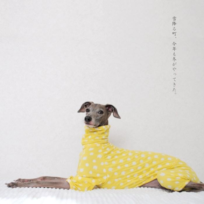 犬服 雪降る町、今年も冬がやってきた。 接結ニット 選べる4タイプ×6カラー