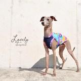 犬服|Lovely|スイス製サッカープリント(しじら織り)|選べる3タイプ×3カラー(ベージュ/ネイビー/グレイ)