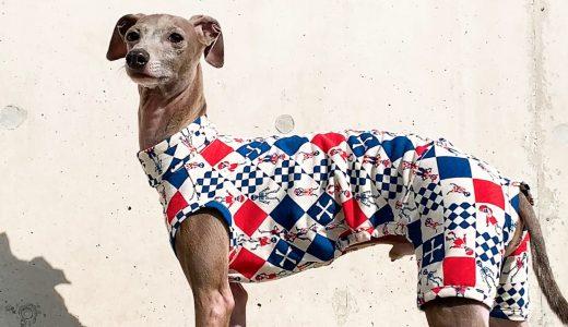 新作犬服の撮影風景、イタグレBuono!今日は絶好調。