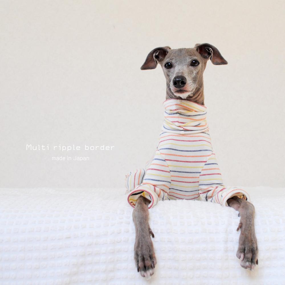 秋って何を着ればいいの?4色のボーダーラインが可愛い犬服