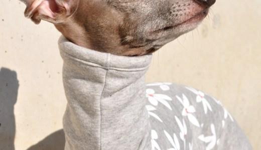 1月の犬服:1月と2月が1年で一番寒い季節です。暖かな犬服10選