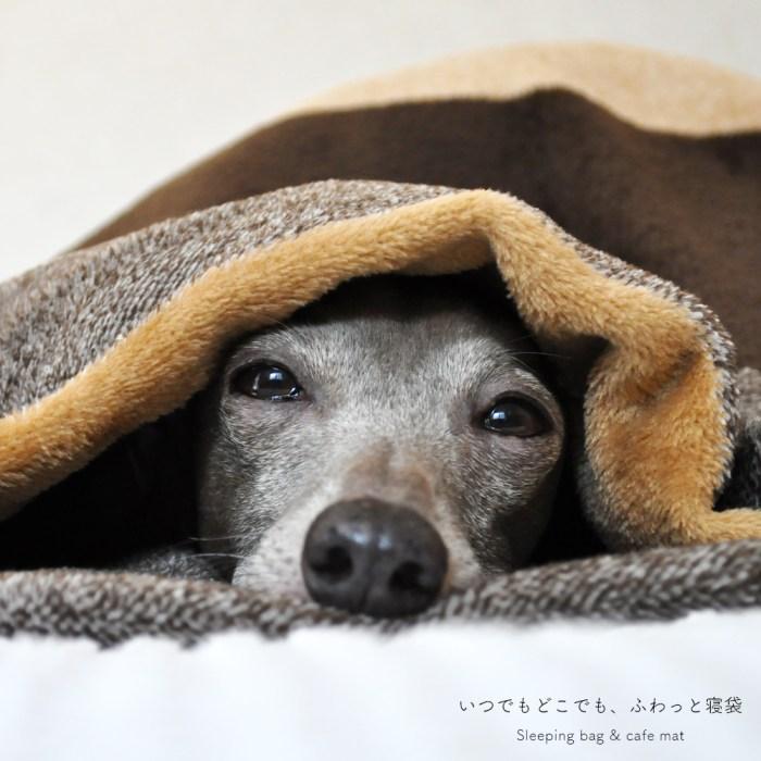 新作犬服|イタグレ服、ミニピン服、ウィペット服、サルーキ服