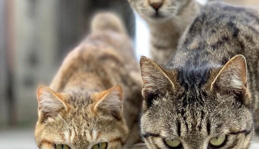 猫派の主人を納得させなければ【2匹目の犬を迎えるまでの物語1】