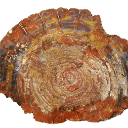 Plaque arizona bois petrifie