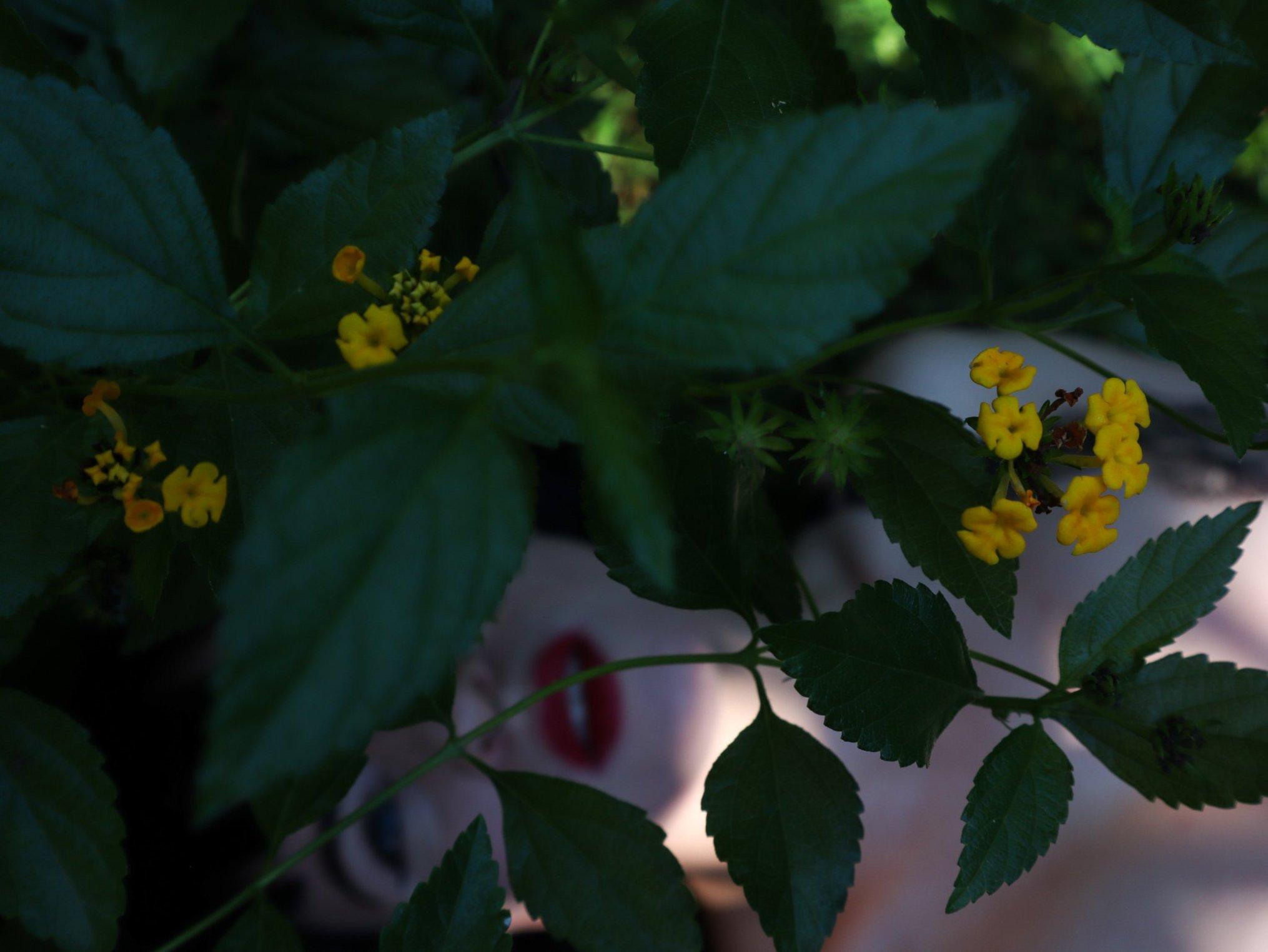 #20 giardino Sabaudia (2)