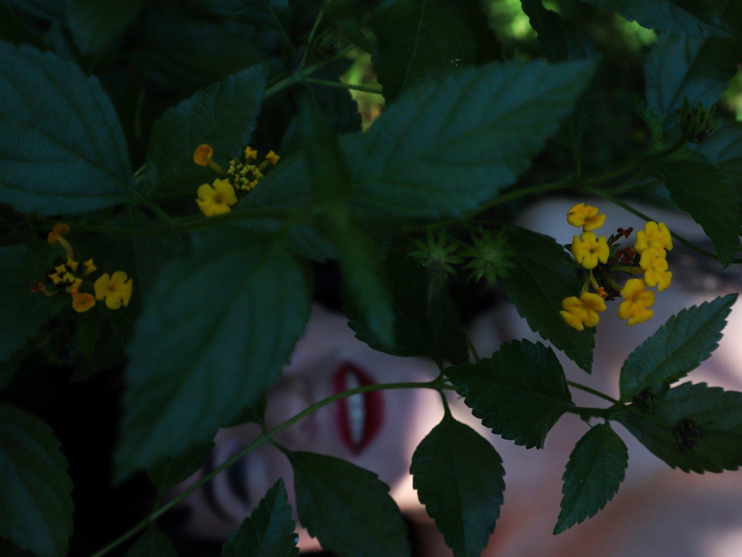 #20 giardino Sabaudia (4)